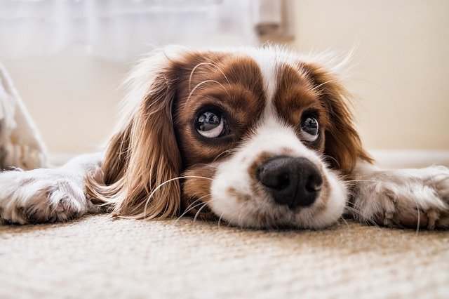 Tips For Selling Your Home With Pets-It Might Be A Selling Point
